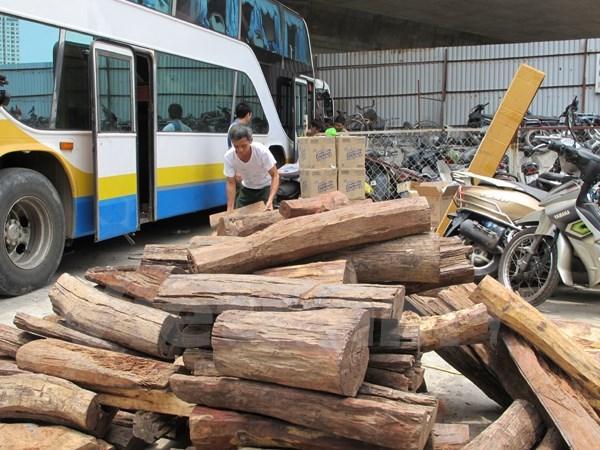 Phù Yên: Bắt xe Ford mang biển số giả, chở đầy gỗ pơmu