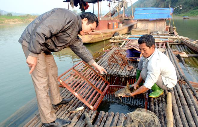Ông Trần Văn Hưng (bên phải), thôn Vân Thành, xã Vĩnh Lợi (Sơn Dương) được cán bộ khuyến nông huyện phụ trách xã hướng dẫn kỹ thuật chăm sóc cá lồng.