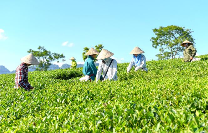 Tuyên Quang: Đổi mới hoạt động của các hợp tác xã